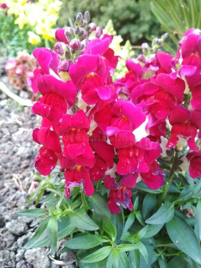 flores стоковые фото