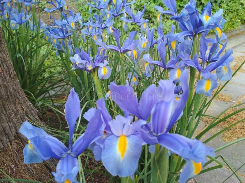 flores стоковые изображения