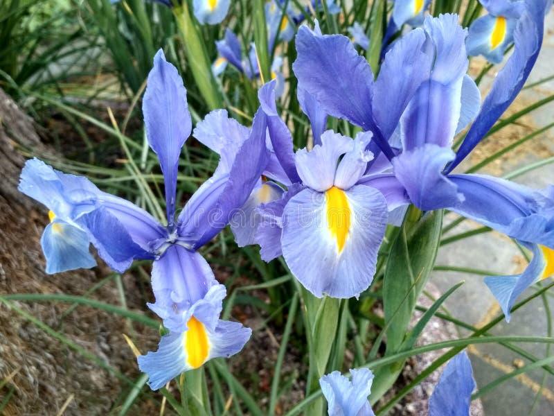 flores стоковое изображение