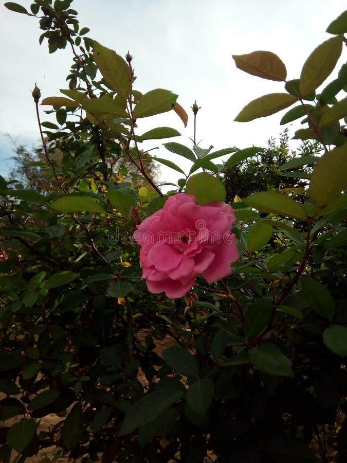 flores photo libre de droits