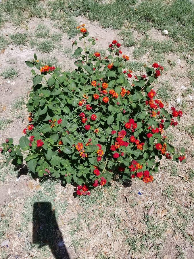 Flores 2 fotos de archivo libres de regalías