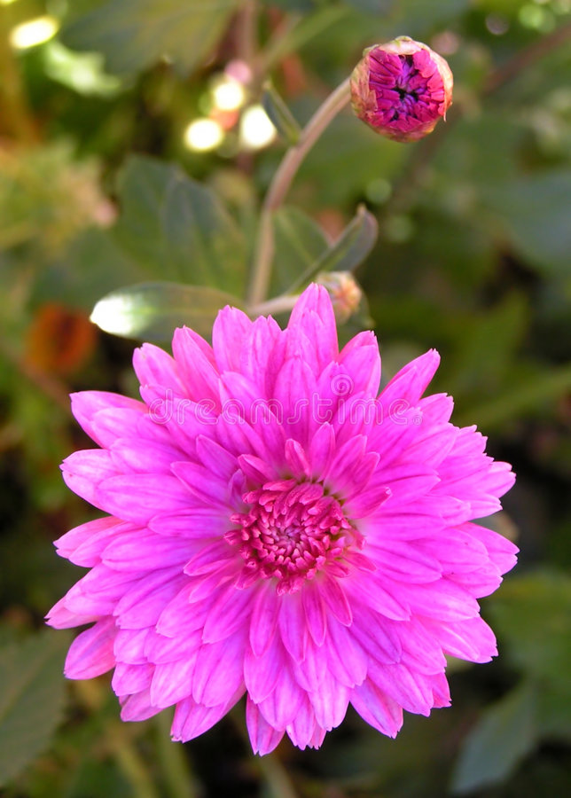 Flores. foto de stock royalty free