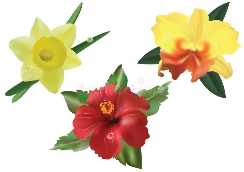 Flores. libre illustration