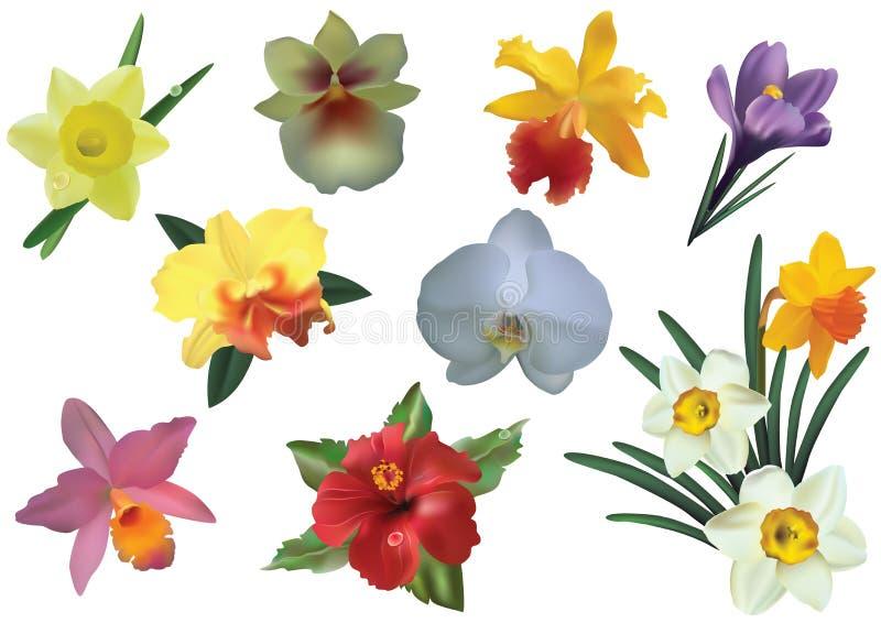 Flores. stock de ilustración