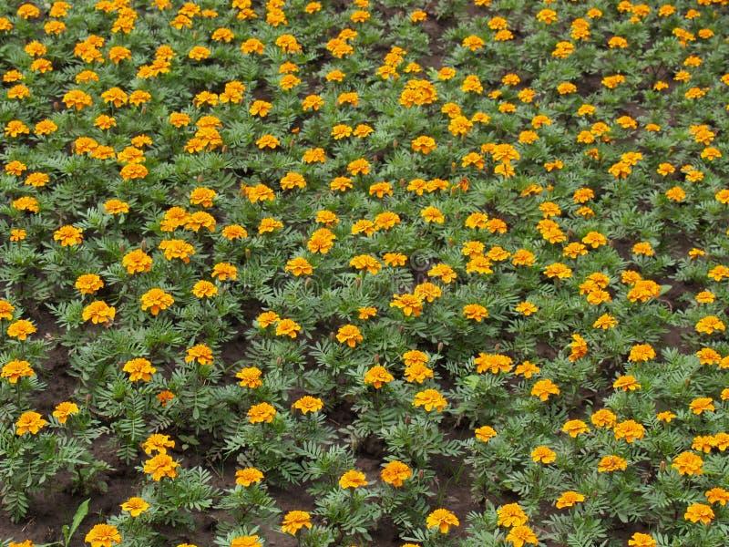 Download Flores [3] imagen de archivo. Imagen de flores, planta - 193203