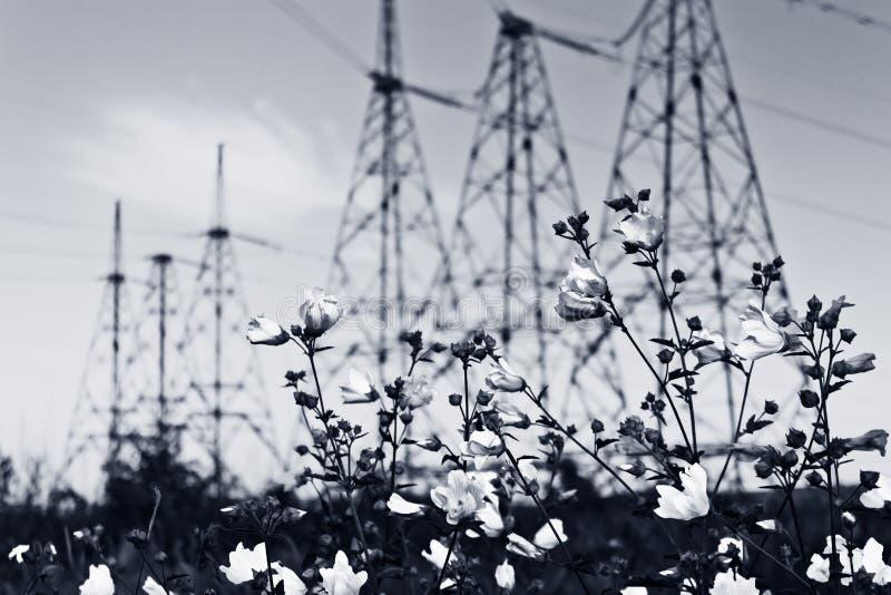 Download Flores foto de archivo. Imagen de cable, electricidad - 41921326