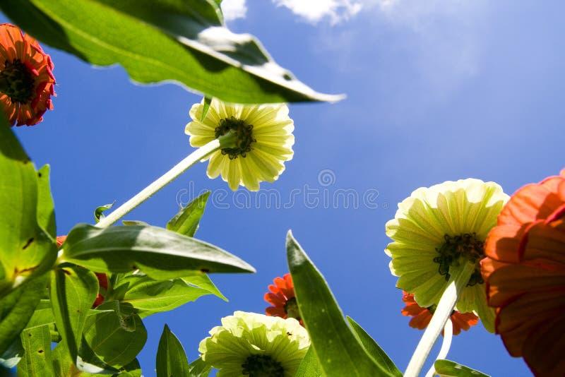 Download Flores imagen de archivo. Imagen de cubo, planta, verde - 7289411