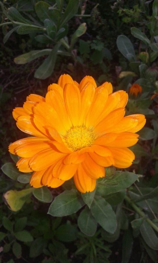 flores zdjęcia royalty free
