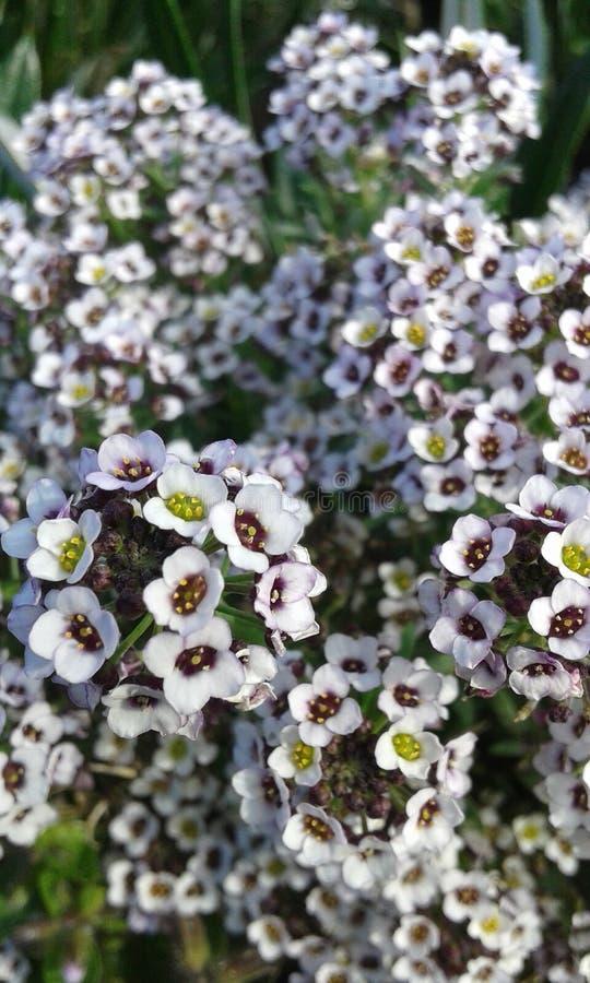 flores obraz royalty free
