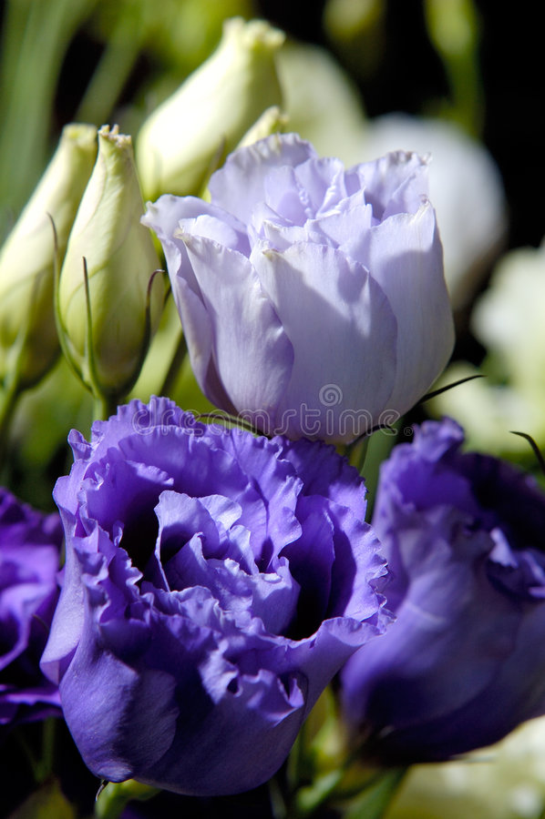 Flores 8 imágenes de archivo libres de regalías