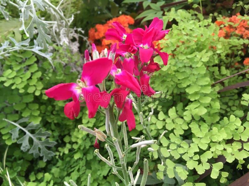 Download Flores foto de stock. Imagem de jardim, nave, rosa, folhas - 80101830