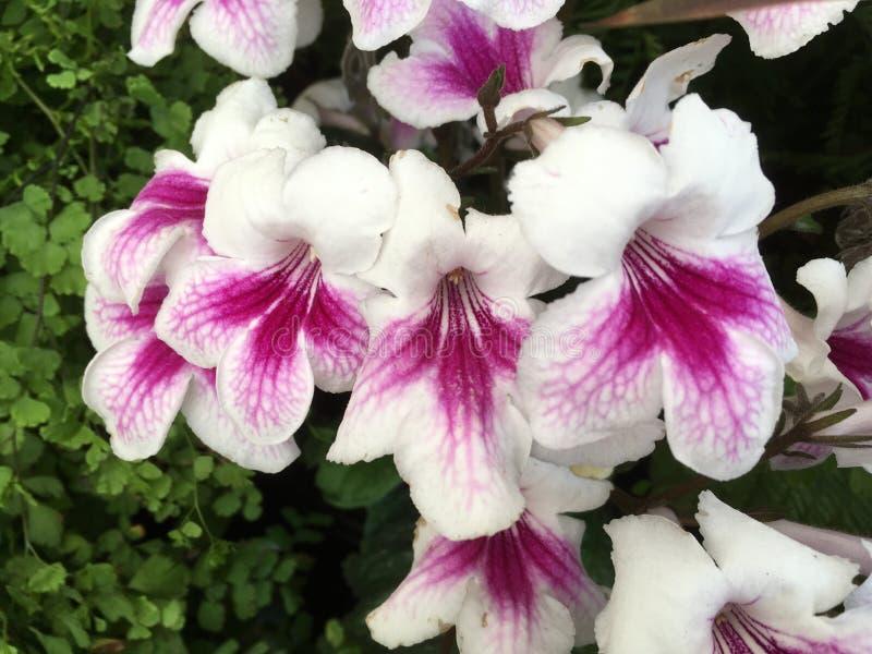 Download Flores foto de stock. Imagem de frondoso, nave, backdrop - 80102032