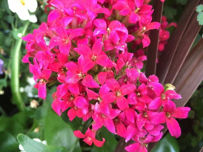 Download Flores imagem de stock. Imagem de folha, tempo, folhas - 80102083