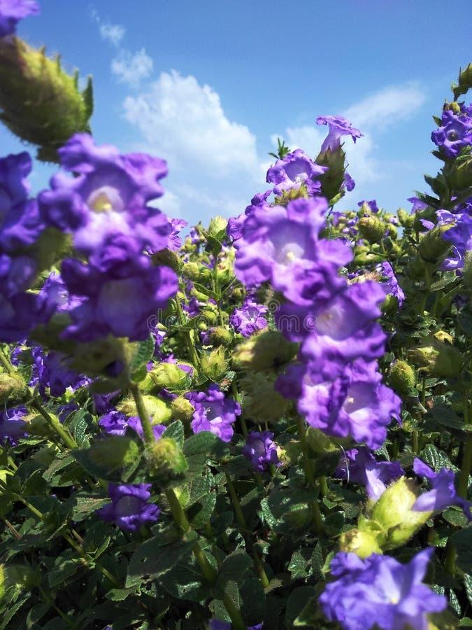 Flores 1 imagenes de archivo