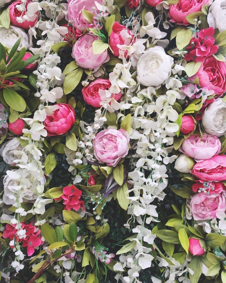 Flores foto de stock royalty free