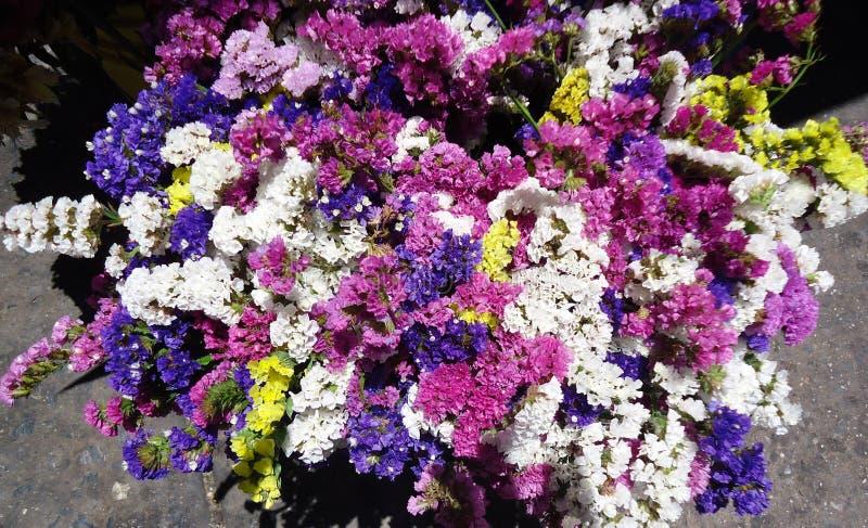 flores photos stock