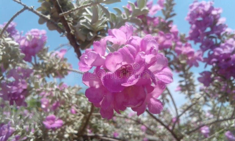flores royalty-vrije stock fotografie