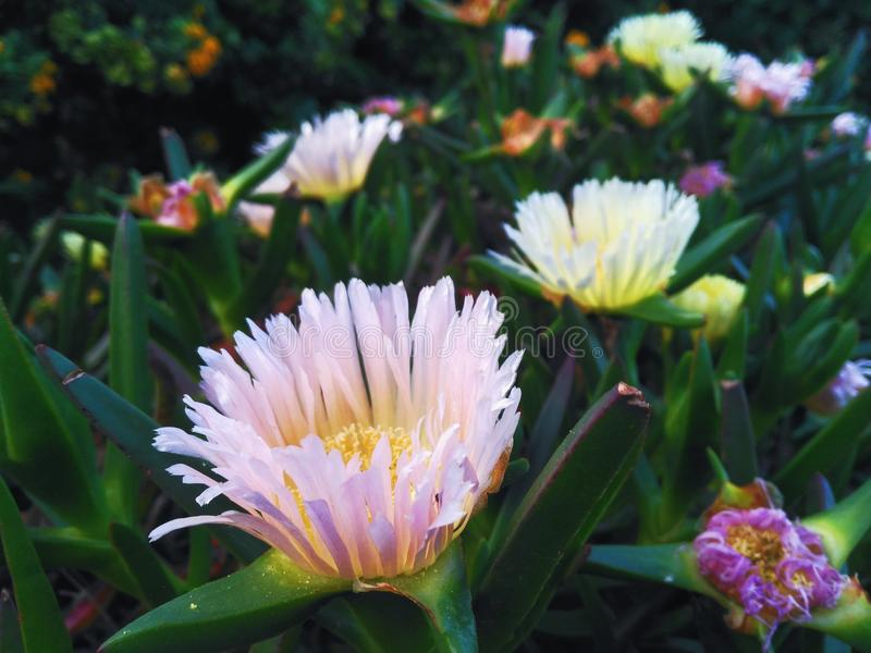 Flores imagens de stock