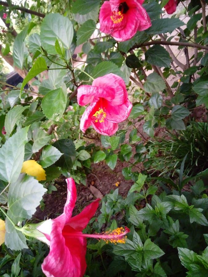 flores fotografie stock libere da diritti