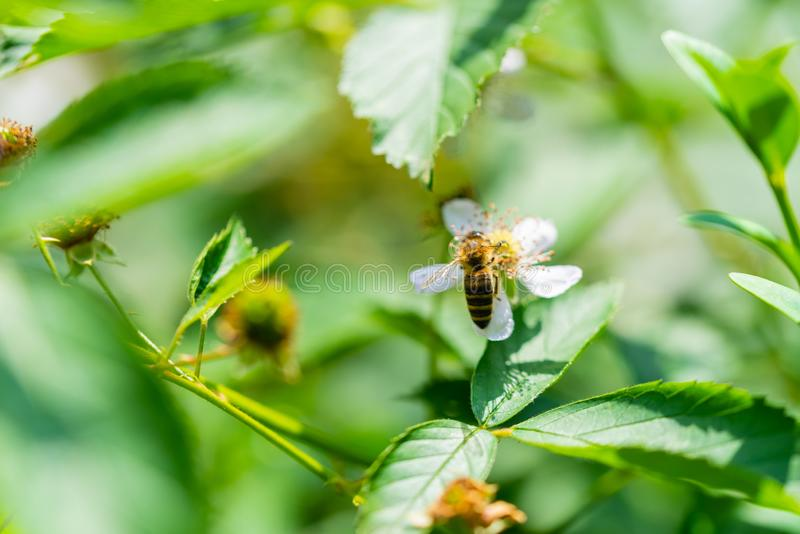 Flores, abejas y muchas otras pequeñas criaturas fotos de archivo
