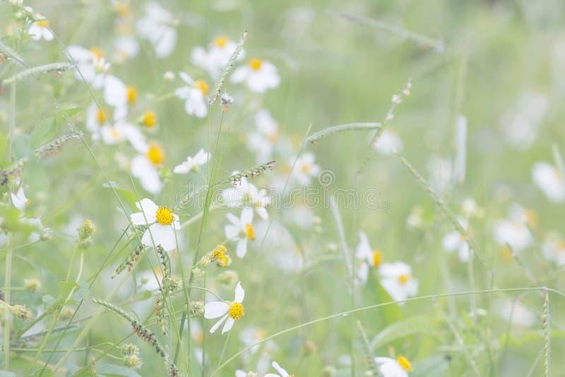 Flores abstractas borrosas del fondo en el prado foto de archivo