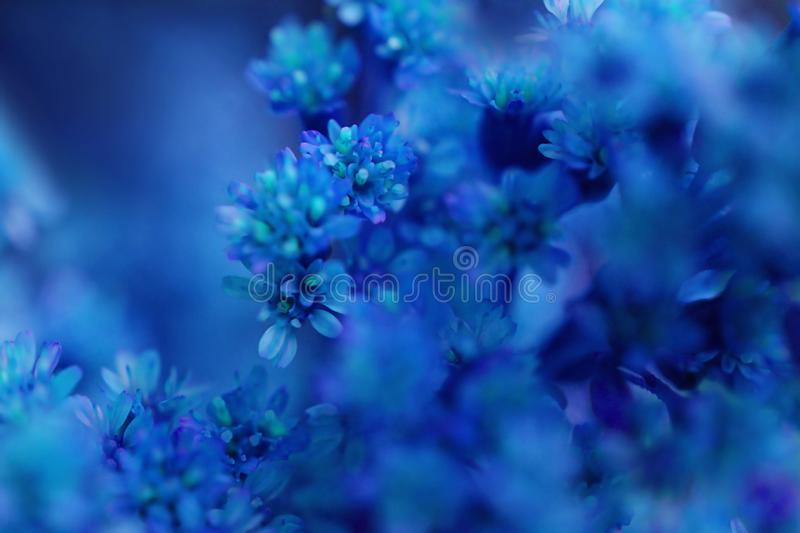 Flores abstractas borrosas en fondo azul imagenes de archivo