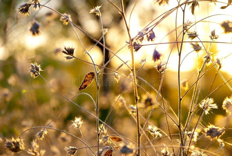 Flores abstratas do cardo imagem de stock