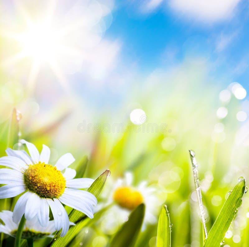 Flores abstratas do verão do fundo da arte na grama imagens de stock