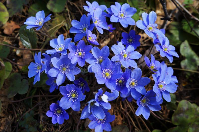 Flores agradáveis da mola foto de stock