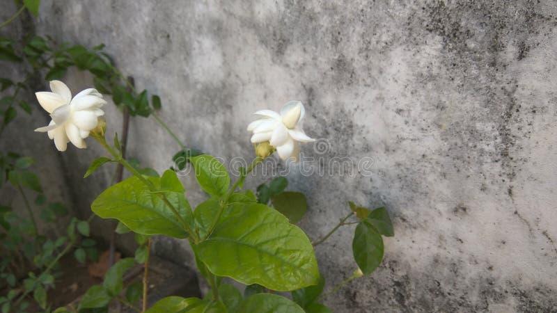 Flores agradáveis do jardim fotografia de stock royalty free