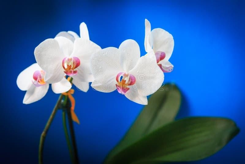Flores agradables de la orquídea fotografía de archivo libre de regalías