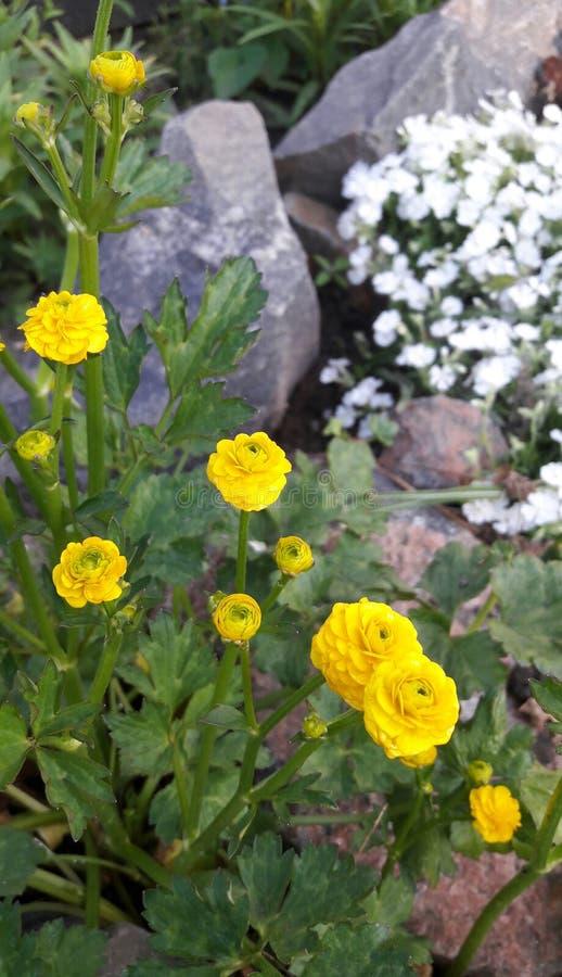 Flores agradables del jardín de piedras fotos de archivo
