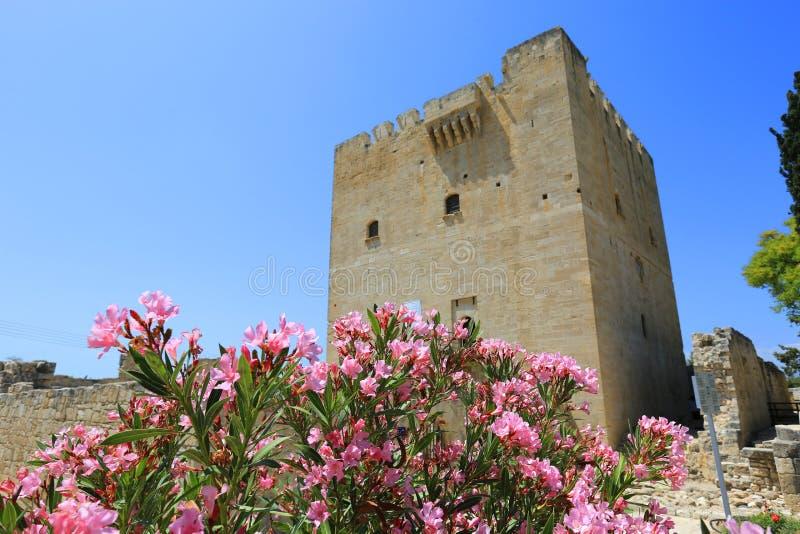 Flores agradables del rododendro en el castillo de Kolossi imágenes de archivo libres de regalías