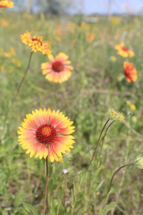 Flores agradables del verano imágenes de archivo libres de regalías