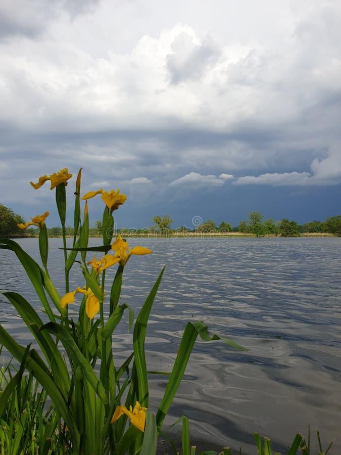 Flores, agua y cielo imagenes de archivo