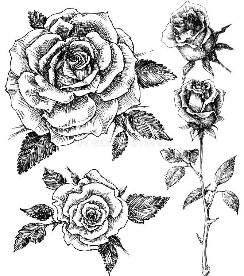 Flores ajustadas ilustração royalty free