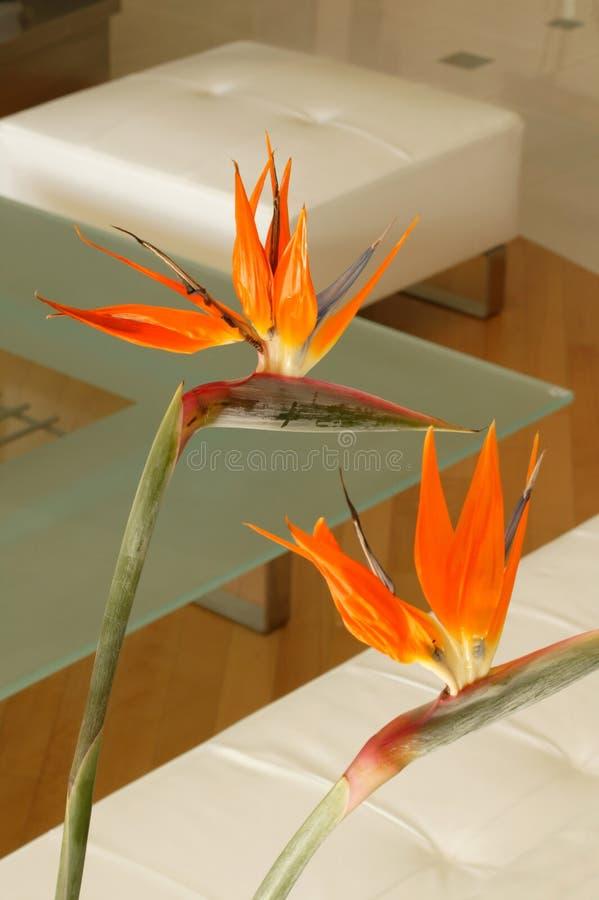 Flores alaranjadas imagem de stock royalty free