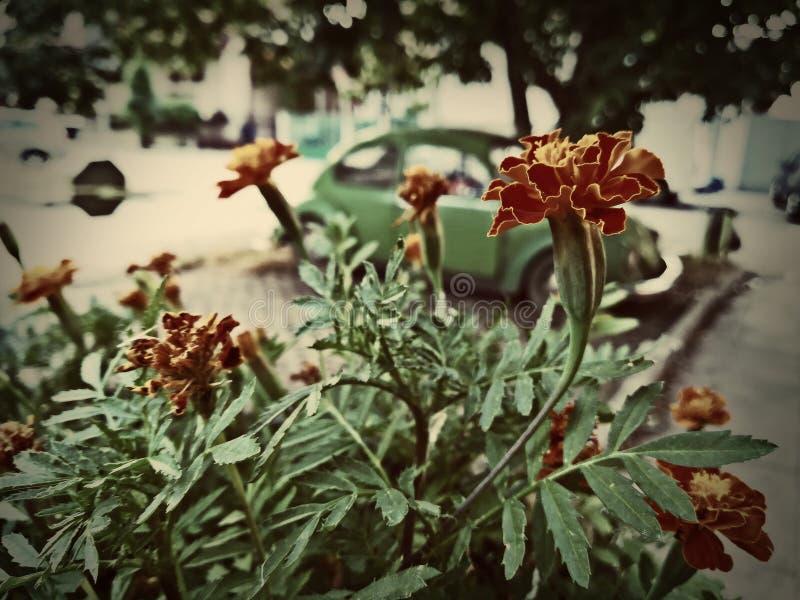 Flores alaranjadas foto de stock royalty free