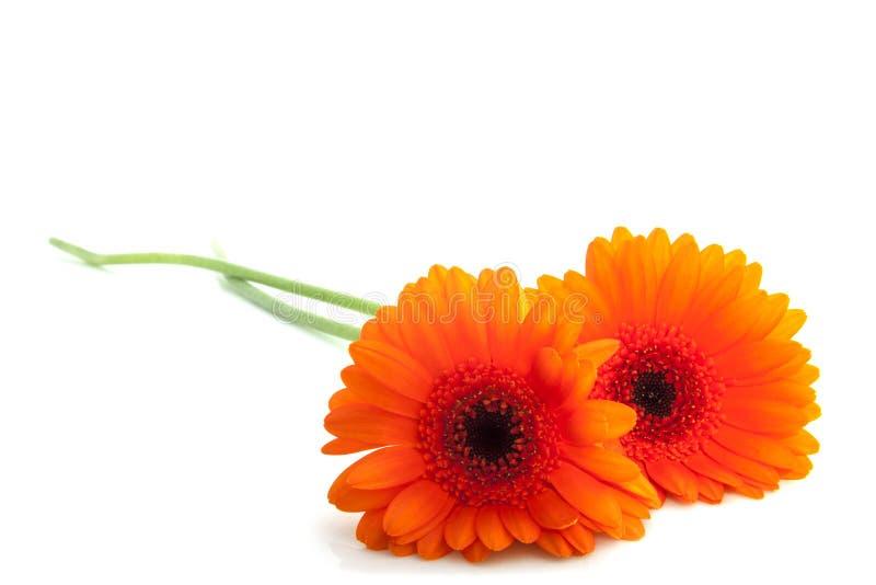 Flores alaranjadas bonitas imagens de stock royalty free