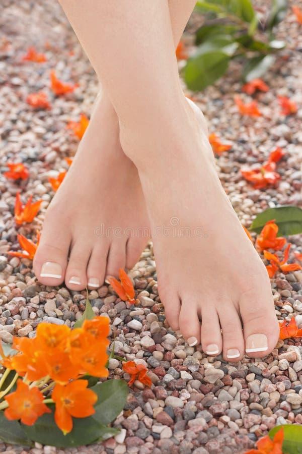 Flores alaranjadas da estrela do pedicure francês natural na natureza imagens de stock