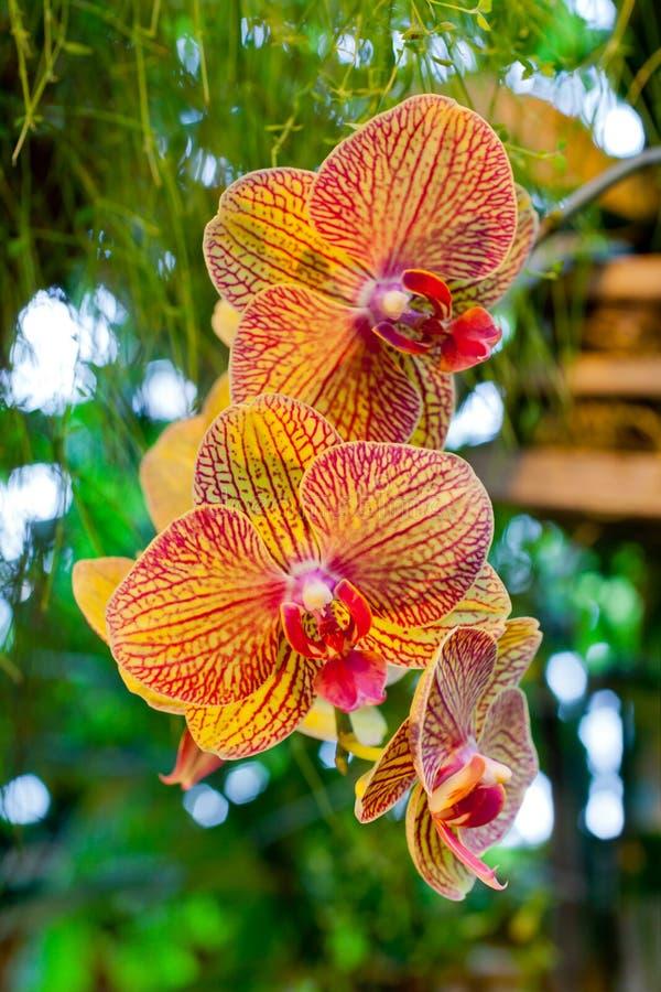 Flores alaranjadas da orquídea no fundo das folhas imagem de stock