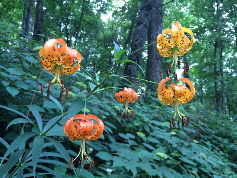 Flores alaranjadas estranhas foto de stock royalty free
