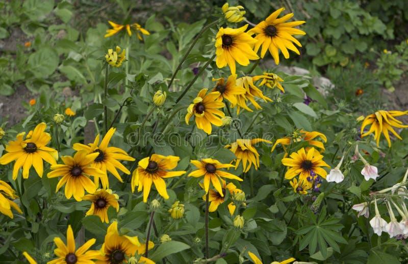 Flores alaranjadas na rua, Amarelo-alaranjada foto de stock royalty free