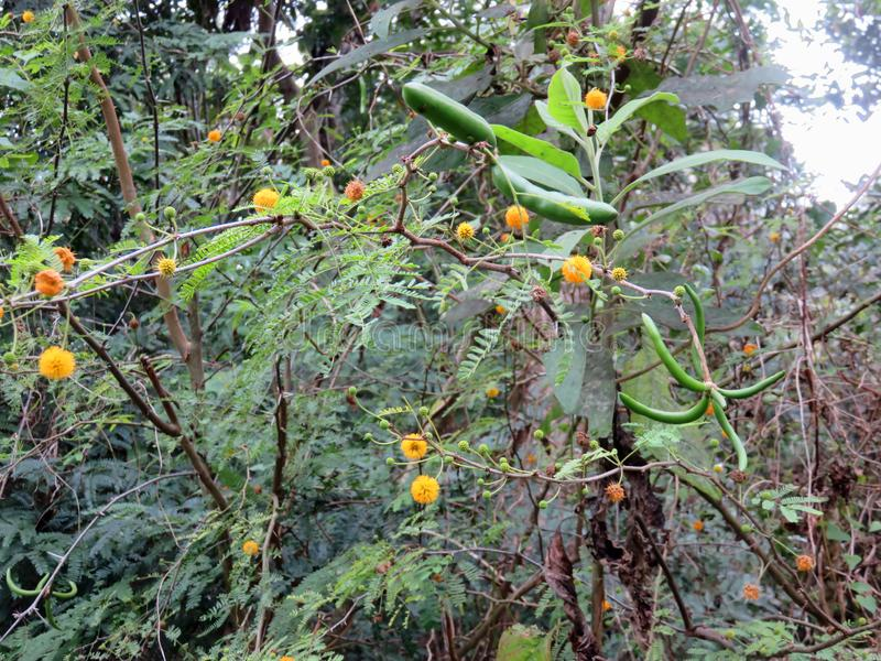 Flores alaranjadas no arbusto fotos de stock royalty free