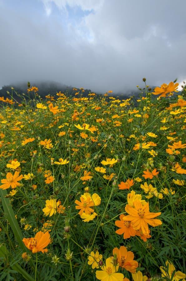 Flores alaranjadas no prado fotos de stock