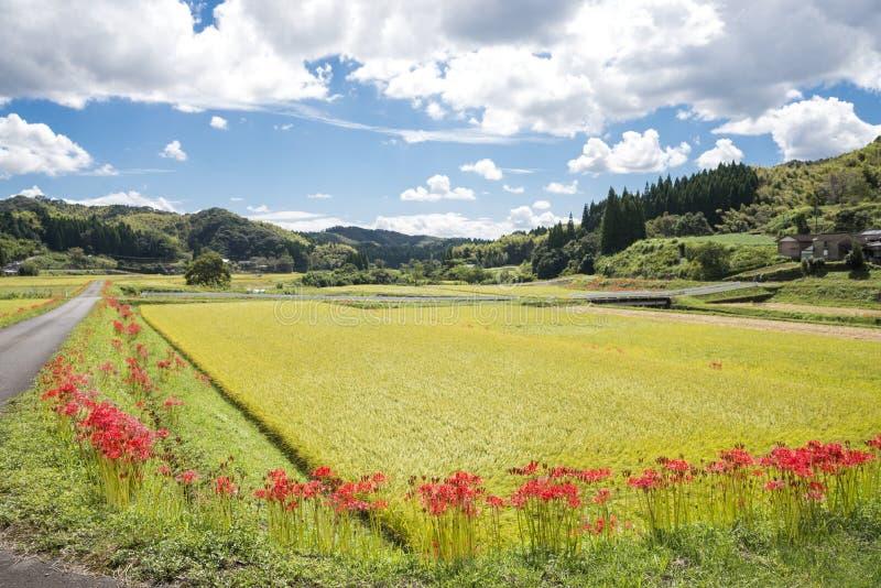 Flores alinhadas imagens de stock royalty free