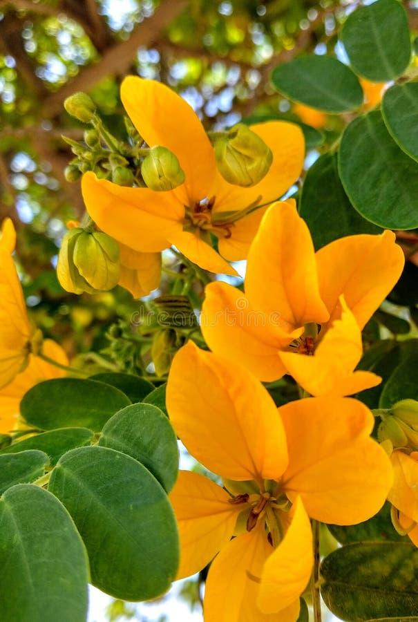 Flores amarelas foto de stock