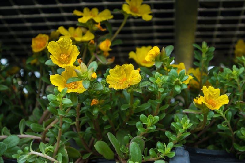 Flores amarelas imagens de stock