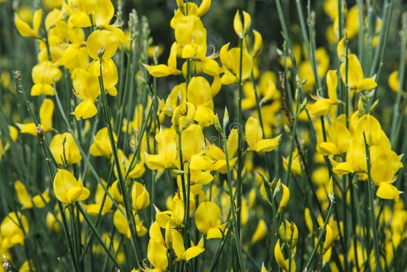 Flores amarelas bonitas foto de stock