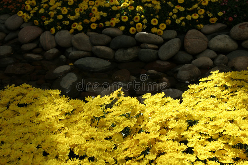 Flores amarelas bonitas foto de stock royalty free